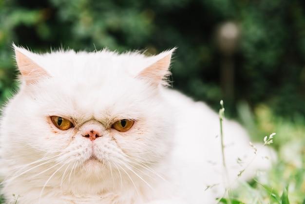 自然の中で素敵な白い猫