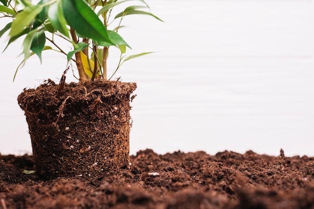 Фон растения