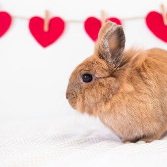 スレッドの上に装飾赤い心の行の近くにウサギ