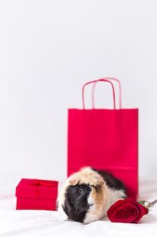 Морская свинка возле подарочной коробки, цветы и бумажный пакет