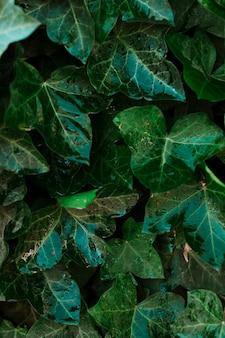 Влажные листья