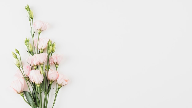 花の背景のコピースペース