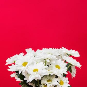 赤い背景にデイジーの花束