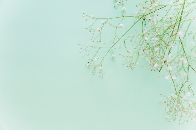 Зеленые цветы ветви на столе