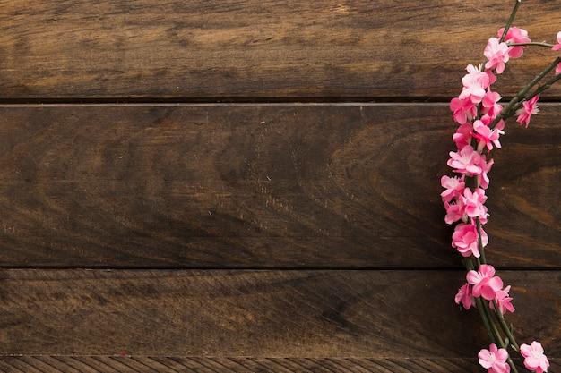 ピンクの花が咲く小枝