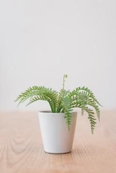 白い植木鉢の緑の植物
