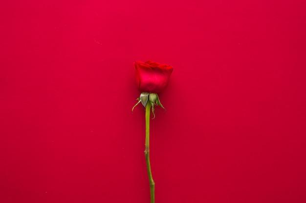 テーブルの上の明るいバラの花