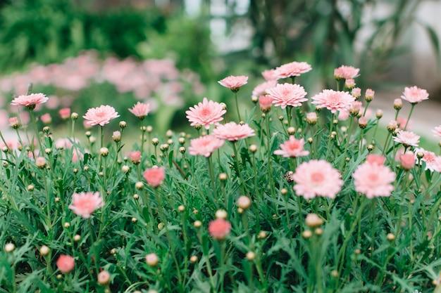 牧草地に成長している菊