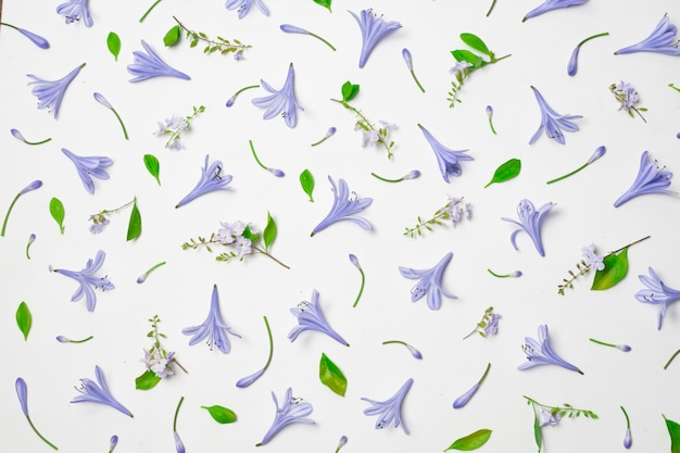 素敵な青い花と緑の葉の組成
