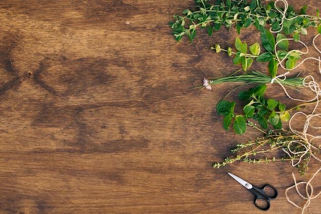 はさみの近くの緑の植物の小枝のコレクション