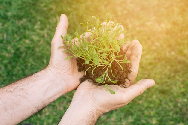 手で小さな苗木を持つ庭師