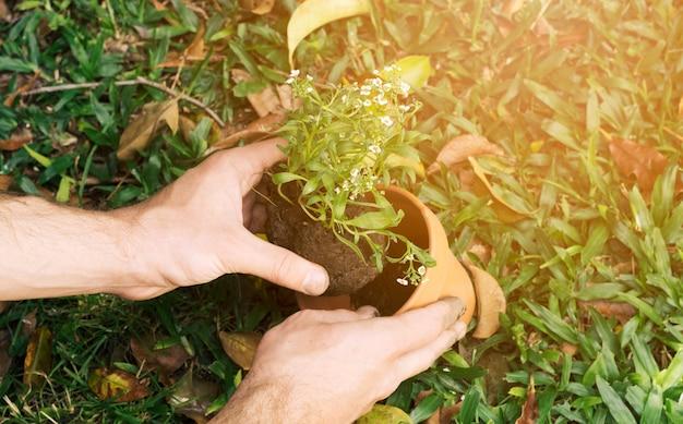 鍋に苗を植える男
