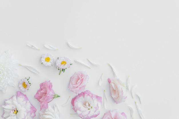 Лепестки вокруг цветов