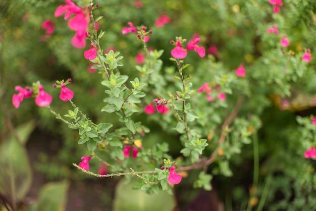 庭の小さな花とブッシュ