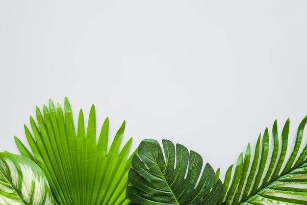 テキストを書くための白い背景の上の濃い緑色の葉