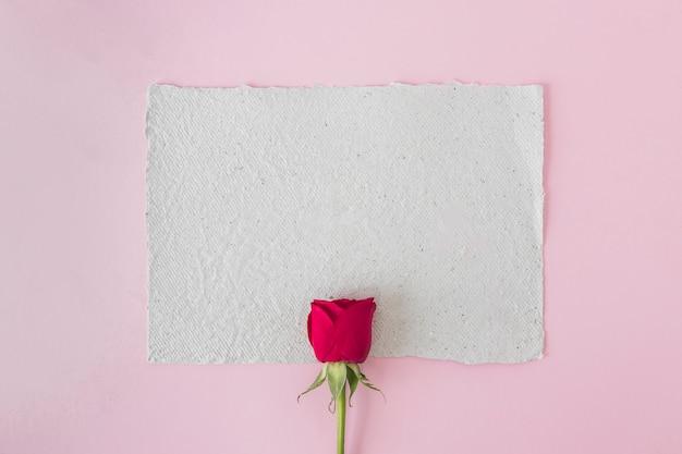 ホワイトペーパーと美しい赤いバラ