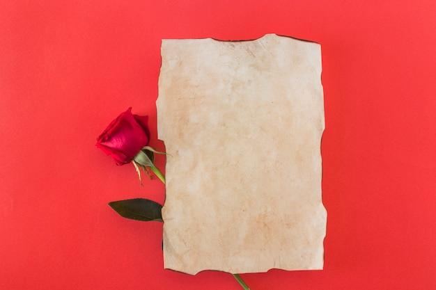 紙と新鮮な素敵な花