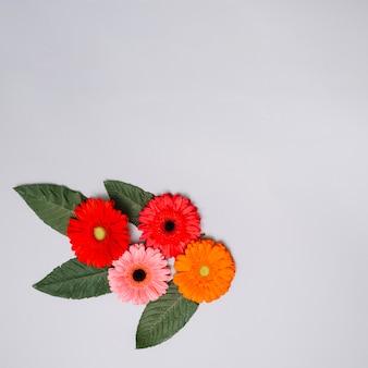 色とりどりの花がテーブルの上の葉を芽します。