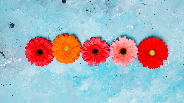 青いテーブルの上の明るいガーベラの花