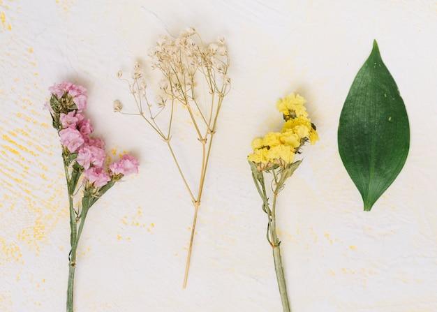 Маленькие цветы ветви на светлом столе