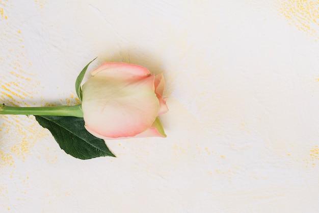 Розовая роза на белом столе