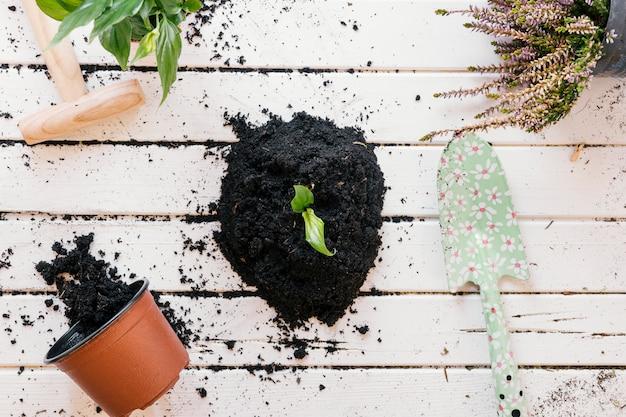 鉢植えの植物のハイアングル。木製のベンチに汚れと園芸工具