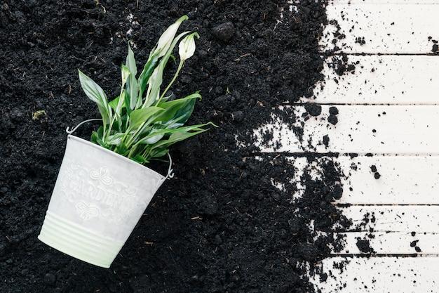 木製の机の上の鉢植えの植物と黒い土の立面図