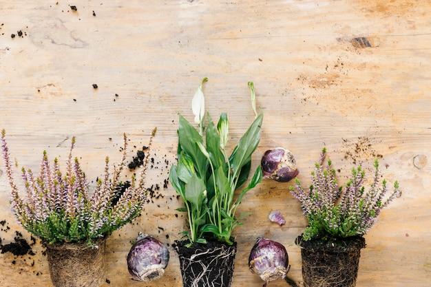 成長している鉢植えの植物と花の植物の下縁。木製の机の上に配置された玉ねぎ