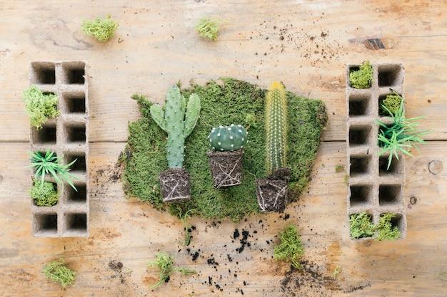 木製の机の上のピートポットトレイと芝生の上の多肉植物の立面図