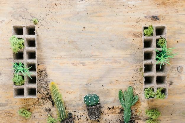サボテンの植物は木製の背景にピートトレイを下に配置します