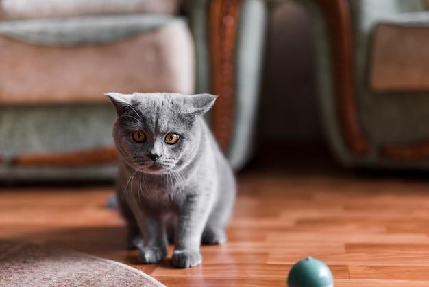 床に灰色のイギリスのショートヘアの猫の肖像画