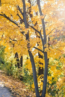 秋の木の森のクローズアップ