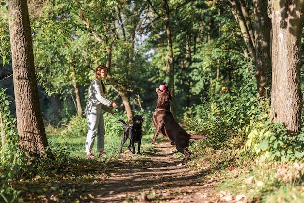 ペットの飼い主が公園で二匹の犬と遊ぶ