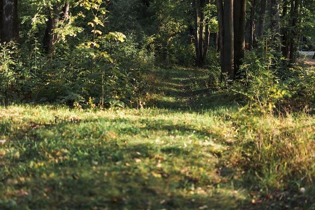 熱帯の緑の森の美しい景色