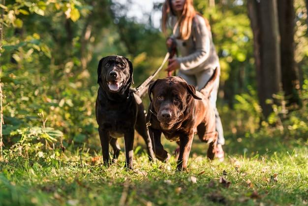 公園で犬を連れて歩いている間リードを保持している女性