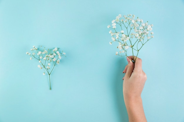 青い背景に赤ちゃんの息の花を持っている女性の手のクローズアップ