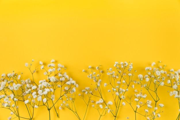 Цветок белого детского дыхания на желтом фоне