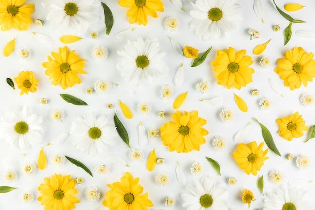 白い背景の上の菊とカモミールの花のシームレスパターン