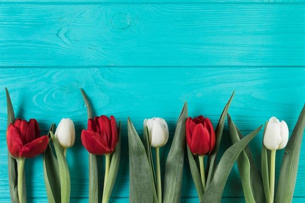 ターコイズブルーの木製の織り目加工の表面に明るい赤と白のチューリップ
