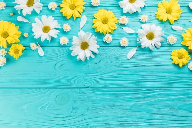 ターコイズブルーの木の表面に黄色と白の菊とカモミールの花