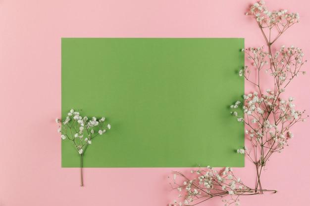 空白の緑とピンクの背景にジプソフィラの花
