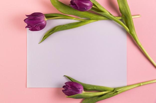 ピンクの背景の白い空白の紙の上の紫のチューリップ