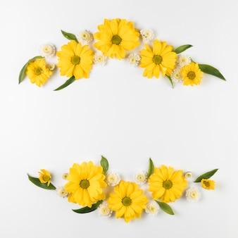 カモミールと菊の花の白い背景で隔離の装飾