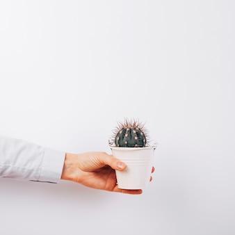 白い背景の上の多肉植物を持っている人の手のクローズアップ
