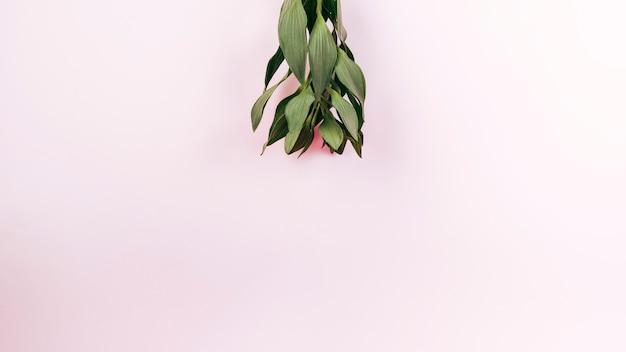 ピンクの背景に緑のチューリップの立面図を葉します。