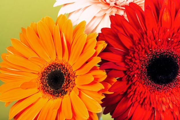 Вид сверху на красный; оранжевый; розовые цветы герберы