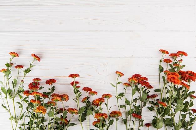 Красные цветы разбросаны по деревянному столу