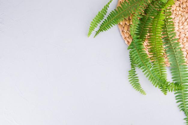 白いテーブルの上の緑のシダの葉