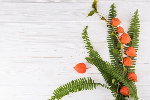 白いテーブルにシダの葉とサイサリスの枝