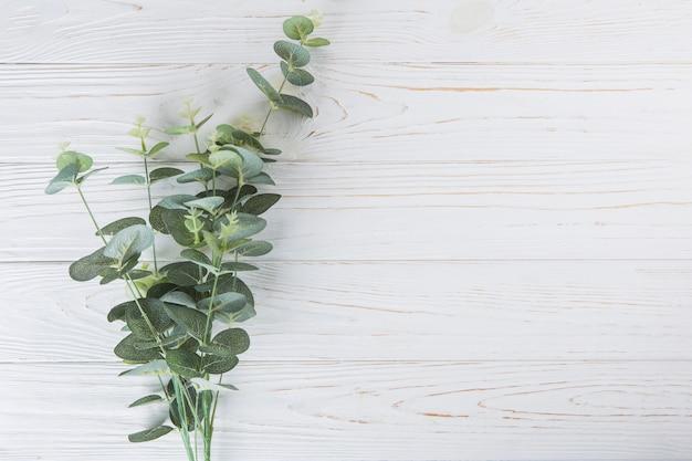白いテーブルの上の緑の植物の枝